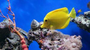 Aquaculture Drug Sodium Ascorbate (Powder) pictures & photos