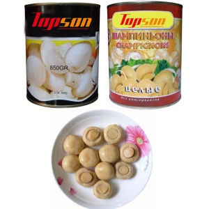 Hot Sale Canned Champignon Mushroom pictures & photos