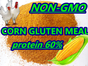 Non-Gmo Corn Gluten Meal Protein 60%Min pictures & photos