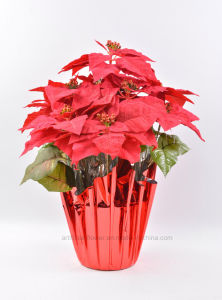 Faux One Side Brush Christmas Flower 11 Heads with Paper Cone for Christmas Decoration
