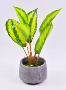 Beautiful Artificial Plants Leaves in Cement Pot