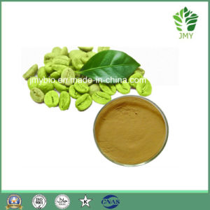 Green Coffee Beans Extract Total Chlorogenic Acids 10%~70% pictures & photos