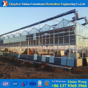 Promotion Hydroponics Agriculture Glass Greenhouse pictures & photos