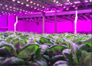 PF More Than O. 9 LED Grow Light pictures & photos
