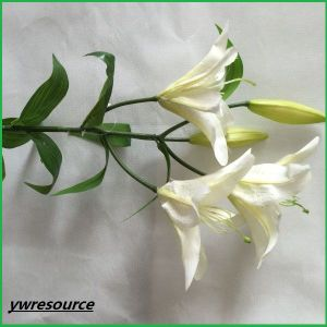 Real Touch White Artificial Flowers Fake Orchid for Home Wedding Decoration pictures & photos