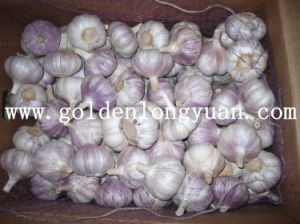 Fresh New Crop Red Garlic for Brazil Market pictures & photos