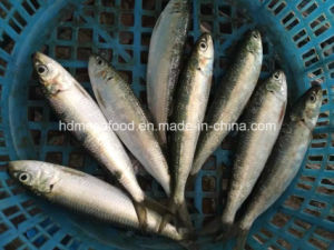 New Land Frozen Seafood Sardine Fish pictures & photos