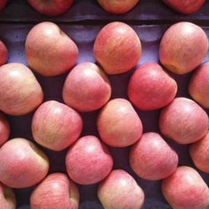 Top Quality of Fresh Blush Red Qinguan Apple pictures & photos