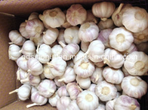 2016 Crop Purple White Garlic (6.0cm&up) pictures & photos