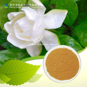 Pure Natural 99% Geniposide Gardenia Extract Powder pictures & photos