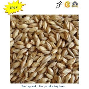 Australian Barley Malt for Producing Beer with Best Quality pictures & photos