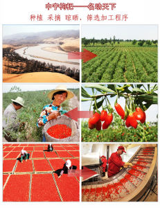 Good Taste Dried Goji Berries pictures & photos