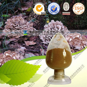High Quality Maitake Mushroom Extract Grifola Frondosa Polysaccharide pictures & photos