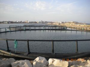 Diameter 30m Tuna Culture Circular Cage pictures & photos