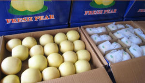 New Season High Quality Golden Pear/Crown Pear pictures & photos