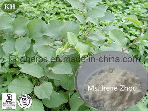 High Natural Polygonum Cuspidatum Sieb. Et Resveratrol pictures & photos