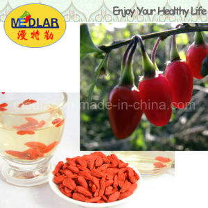 Medlar Lbp Hot Sell Organic Dried Goji pictures & photos