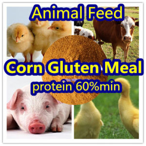 Corn Gluten for Animal Feed Protein 60% pictures & photos