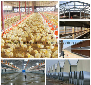 Steel Structure Poultry Farm and Full Set Poultry Equipment pictures & photos