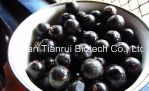 Wholesale Factory Acai Berry Extract /Acai Berry Juice Powder /Acai Berry Powder pictures & photos