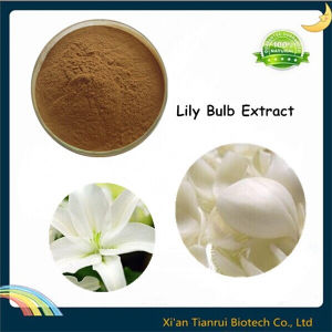 Natural Lilium Brownii, Lily Bulb Extract pictures & photos