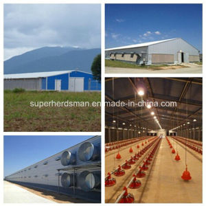 Poultry Farm Design and Construction with Steel Structure pictures & photos