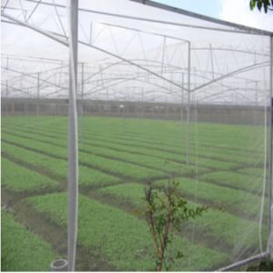 Meyabond Greenhouse Anti Insect Net for pictures & photos