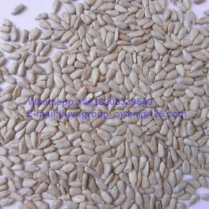 Bakery Grade Sunflower Seeds Kernel pictures & photos