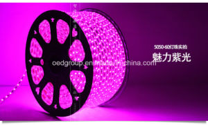 Purple LED Rope Light pictures & photos