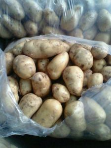 2017 New Crop High Quality Fresj Potato pictures & photos