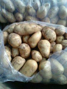 2017 New Crop High Quality Fresj Potato pictures & photos