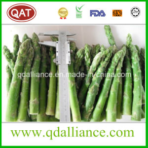 IQF Frozen Spring Green Asparagus pictures & photos
