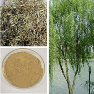 100% Natural White Willow Bark Extract (Salicin 15%-98%HPLC) pictures & photos
