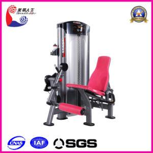 Disabled Fitness Equipment Name Leg Extension (LK-9012)