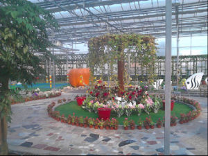 Venlo Type Multi Span Commercial Glass Greenhouses