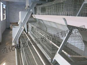 Hot Sale of Automatic Chicken Cage Certificate of ISO9001 pictures & photos