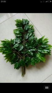 Artificial Plants and Flowers of Silver Ficus Gu-Jy902121641 pictures & photos