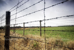 Galvanized Barbed Wire pictures & photos