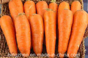 2017 New Crop Chinese Fresh Carrot in Carton pictures & photos