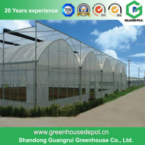 Mutil Span Agriculture Plastic Film Greenhouse Supplier for Vegetable Tomato Flowers pictures & photos