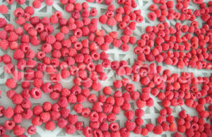 IQF Raspberry or Frozen Raspberry pictures & photos