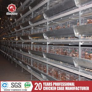 Best Quality Broiler Cage for Africa Farm pictures & photos
