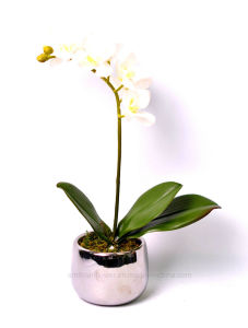 Colourful Artificial Orchid in Ceramic Pot as Flower Decoration pictures & photos