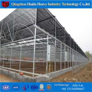 Specialized Factory Offer Larger Multi-Span Greenhouse Agricultural Film Greenhouse pictures & photos