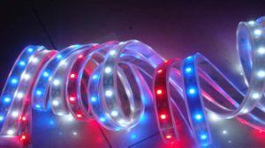 5050 SMD Ribbon RGB Series