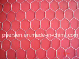 Hot-Dipped Galvanized Hexagonal Chicken Wire Mesh pictures & photos