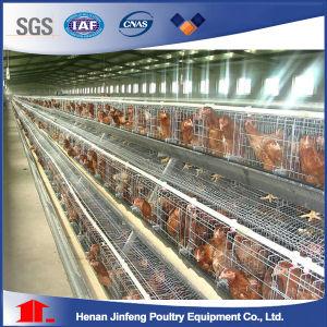 Jaulas Ponedoras Pollos Sudamerica Market Chicken Cage in Chile pictures & photos