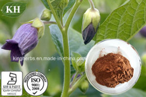 High Quality Belladonna Extract Hyoscyamine pictures & photos