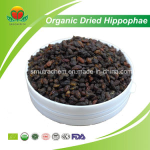 High Quality Organic Dried Hippophae Rhamnoides pictures & photos