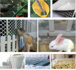 HDPE Plastic Mesh, Plastic Flat Netting, Chicken Plastic Netting pictures & photos
